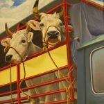 Cristallini, mucche al mercato, olio su tela cm. 80x100
